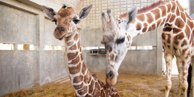 4 tips om effectief de inkoop van zakelijke energie voor uw dierentuin te regelen.