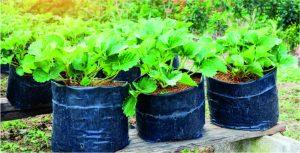 Duurzaam en efficiënt zakelijke energie inkopen voor uw kwekerij: schakel de hulp in van onze experts.