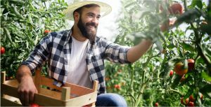 Tips voor de zakelijke energie voor u als tuinder? Lees snel verder!